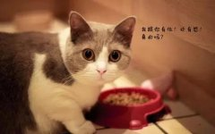 猫咪的记忆力究竟有多长? 爵加betway官网