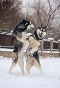 秋冬季节狗狗健康最容易出的几个问题