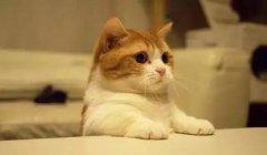 你有猫吗?想养一只吗?派得betway官网