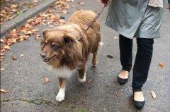 宠主一定要知道,带狗狗散步对狗狗来说有重要