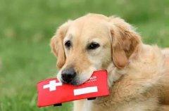 狗狗突然休克的急救办法