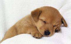 """避免狗狗因为挑食患上的""""胃病"""",改善狗狗挑"""