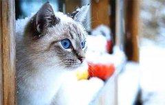 猫咪的毛那么多,它冬天怕冷吗?