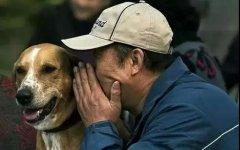 """揭晓狗狗不为人知的""""6个秘密"""",知道5个的没白"""