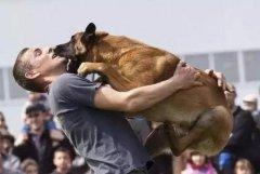 狗狗被惯坏的5大表现,再不改铲屎官们就得注意