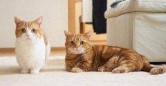 6个让猫乖乖听话的办法,养猫的你不能不知道的秘