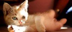猫咪一生分为5个阶段,应该如何才能更好的抚养