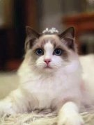 精致小主的猫咪 得有多性感?