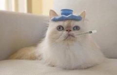 猫咪感冒了怎么办呢?