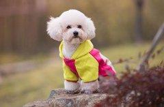 下雨天外出遛狗需要注意什么?