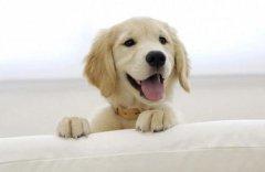 为狗狗剪指甲需要注意什么?