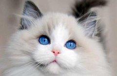 猫咪的视力很好吗?