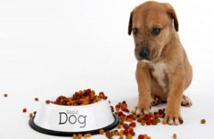 狗狗食欲突然减少怎么回事?