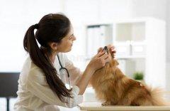 你知道该怎么去除狗狗体臭吗