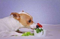 狗狗可以吃蔬菜吗?吃什么蔬菜好呢?
