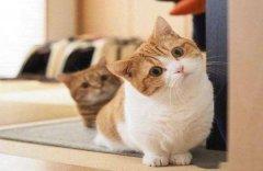 """猫咪狗狗""""歪头杀""""什么意思?"""