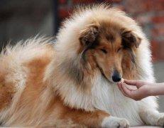 秋季狗狗换毛期,你需要知道的问题和办法