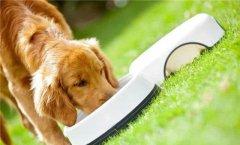 狗粮的主要营养成分分析