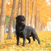 秋季对狗宝宝的影响